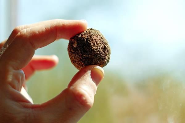 Seed bomb aka Seed ball (Guerilla gardening) CC BY-SA 3.0, Herder3