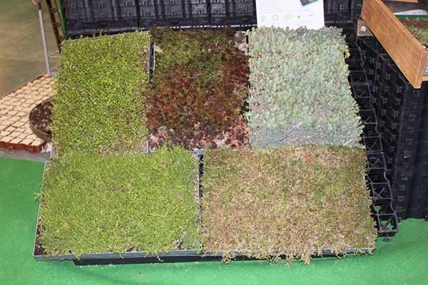 Green roof examples, credit: Marta Ratajszczak