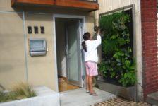 Vertical Garden System at the Screen House | San Francisco, CA