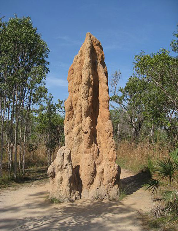 Photo Credit: Cathedral Termite Mound by