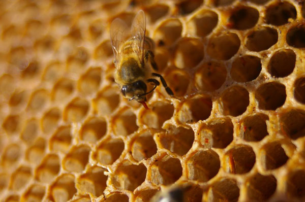 Photo Credit: Honeycomb by Peter Shanks CC2.0