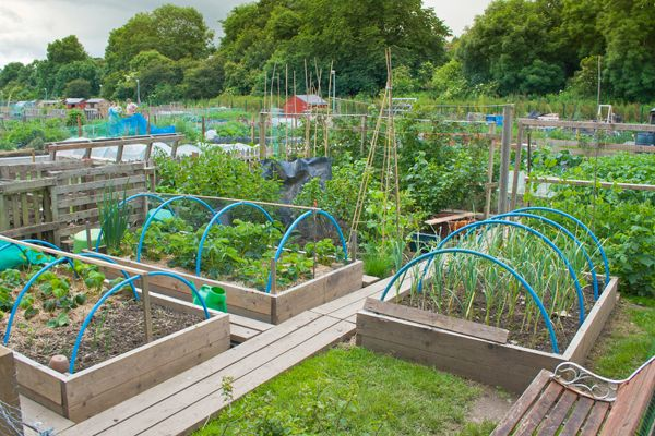 Allotments make a great place to volunteer; credit:  johnbraid / shutterstock.com
