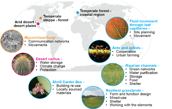 Map of organisms