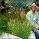 "Interview with ""Guru of Grasses"" John Greenlee"