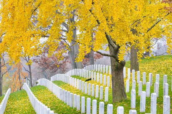 Arlington National Cemetery near to Washington DC; image credit: Orhan Cam / shutterstock.com