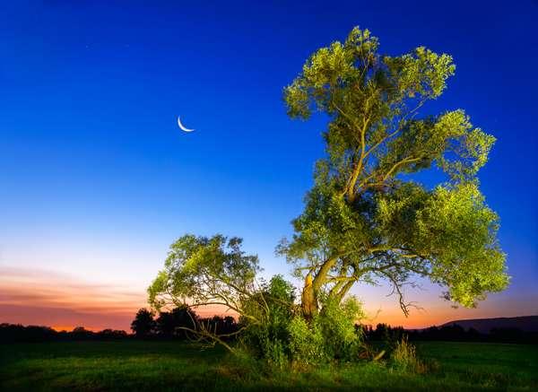 Italian Cypress | Ash tree