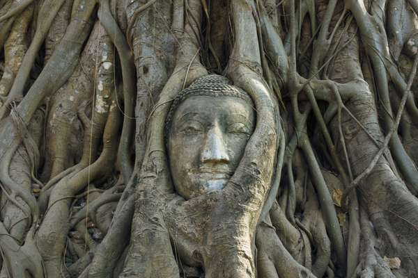 sacred trees | The Bodhi Tree