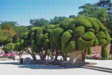 Spanish Landscape Architecture: Classical Gardens