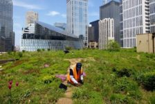 Washington D.C. Leads North America's 10% Green Roof Industry Growth of 2013