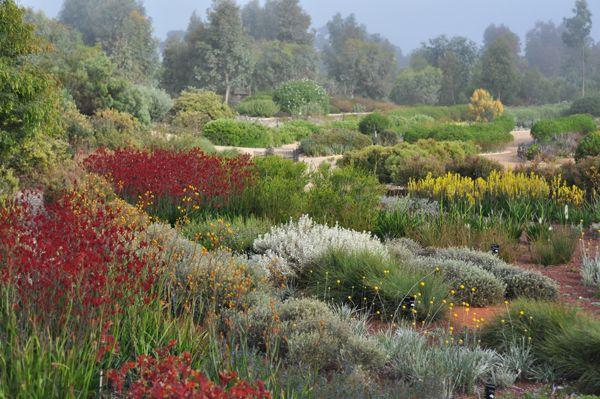 Australian-Garden