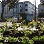 The Challenges of Urban Agriculture: Contamination, Economics, and Management