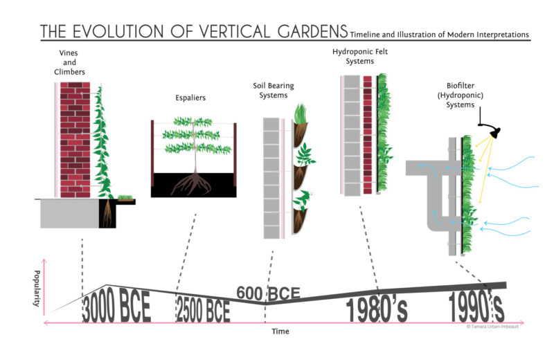 A History of Vertical Gardens From Simple Vines to Hydroponic Systems