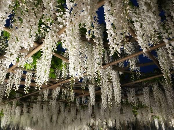Ashikaga Park. Credit: Yoshinori Fukumoto