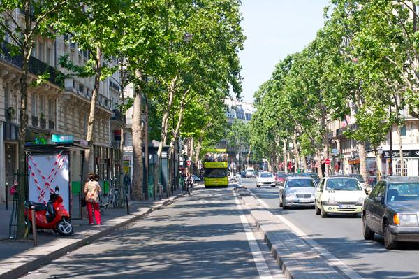 Built up urban areas leave little room for good root systems. Boulevard Saint-Germain, Paris. Credit: CC BY-SA 2.0 Aleksandr Zykov from Russia - Paris Uploaded by Paris 17