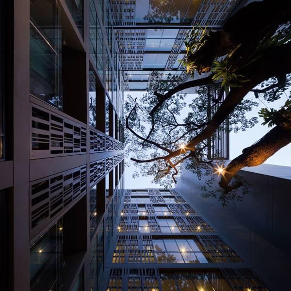 Tree at the Via Botani project. Photo credit: Wison Tungthunya