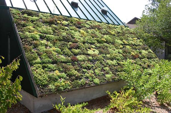 extensive green roof - Certainly no drainage problems with this green roof. Credit: CC BY-SA 2.0 Ryan Somma