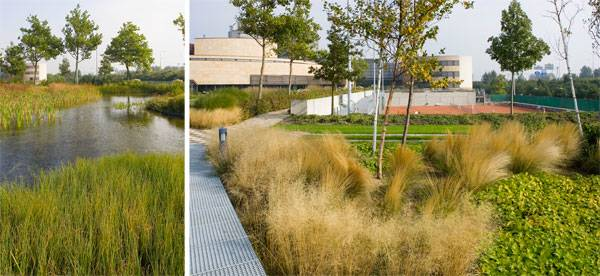 Green roof Credit: OODA architects
