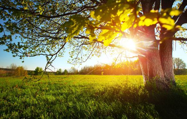 The best time to plant a tree was 20 years ago. The second best time is now. Image credit: Shutterstock.com