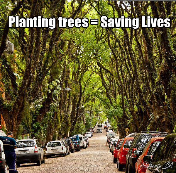 Trees-in-the-landscape : GONÇALO DE CARVALHO; credit: Adalberto Cavalcanti Adreani