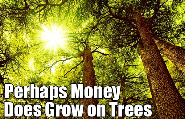 The financial benefits of growing trees are too good to be ignored. Image credit: Shutterstock.com