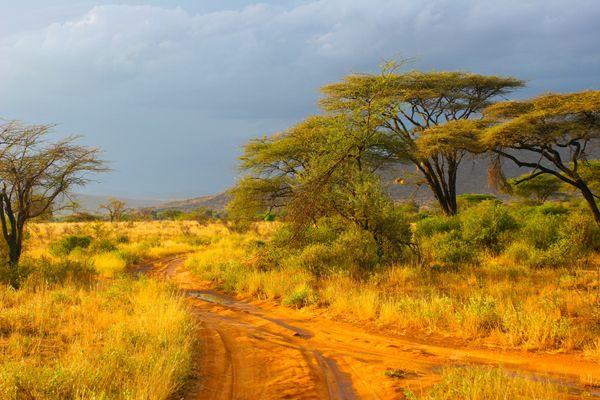 Conservation projects. Landscape of Samburu, Kenya; image credit:  Piotr Gatlik / shutterstock.com
