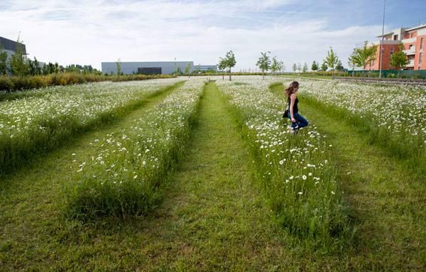 Landscape-Architecture - Copyright 2014 Fluidity Design Consultants