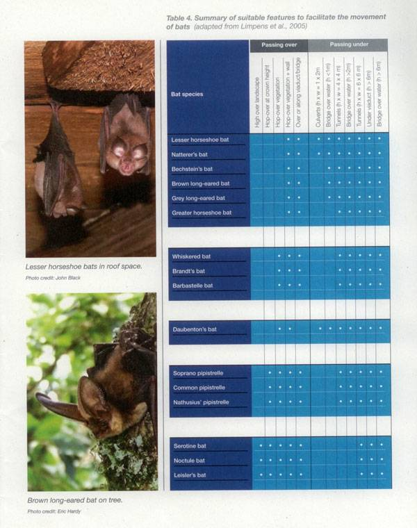 Section form the book - Landscape and urban design for bats and biodiversity