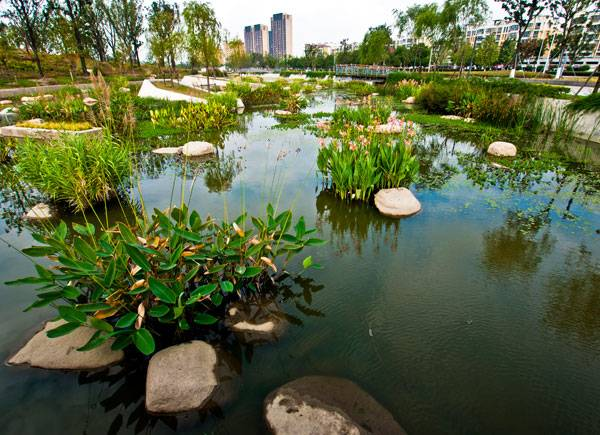 Lotus Lake Park. Credit: Integrated Planning and Design Inc.