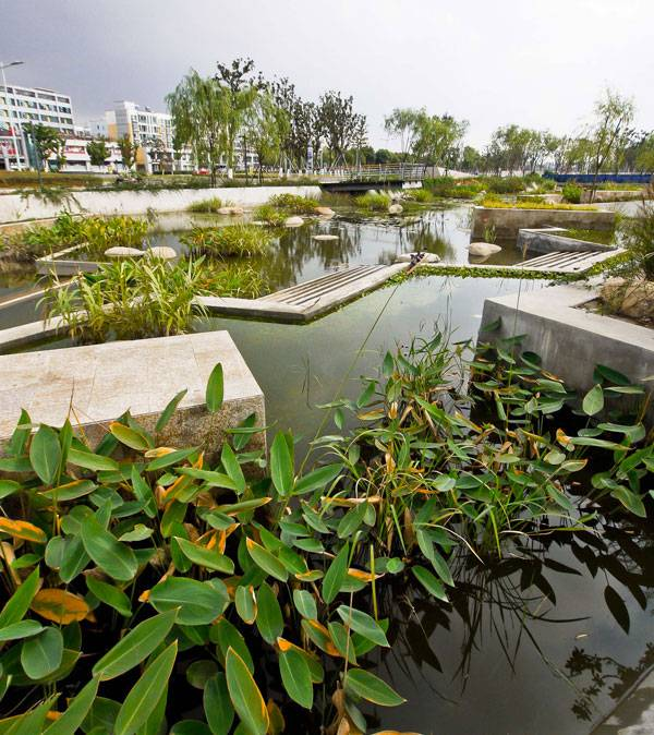 Departments of Parks and Recreation - Lotus Lake Park. Credit: Integrated Planning and Design Inc.
