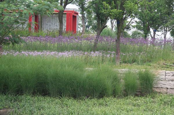 sustainable urban design -  Lotus Lake Park. Credit:  Integrated Planning and Design Inc.