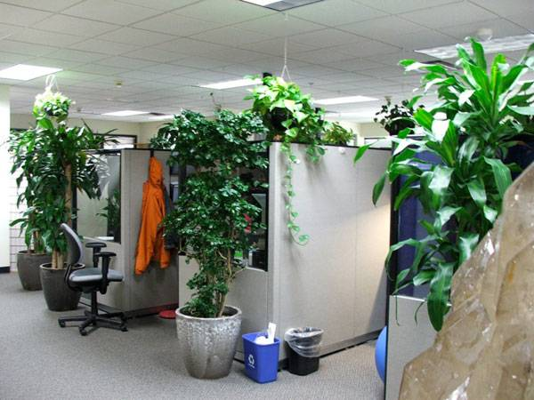 Get your work space planted up for better performance. Credit: Kelly Cookson, CC 2.0, source