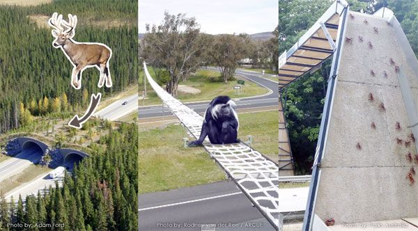 Man-made solutions for keeping animals safe. Image credit: Printscreen/source