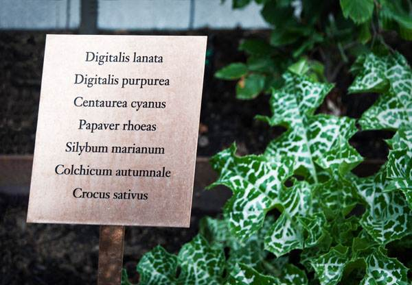 The Physic Garden. Photo credit: Thorbjörn Andersson