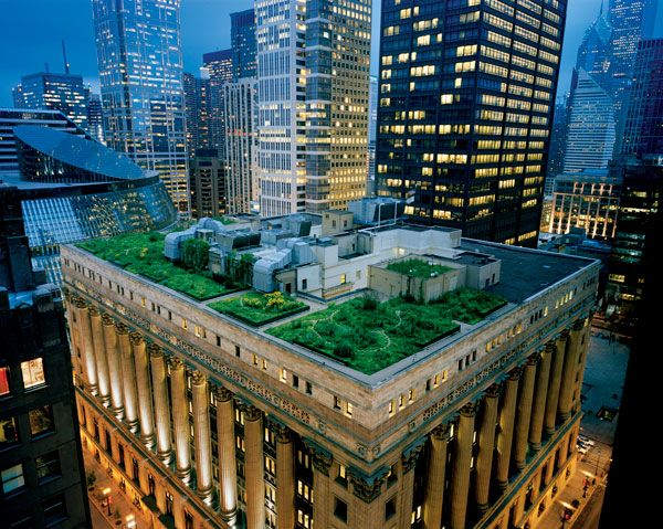 Chicago Green Roof. Photo credit: Cook and Jenshel NG Creative