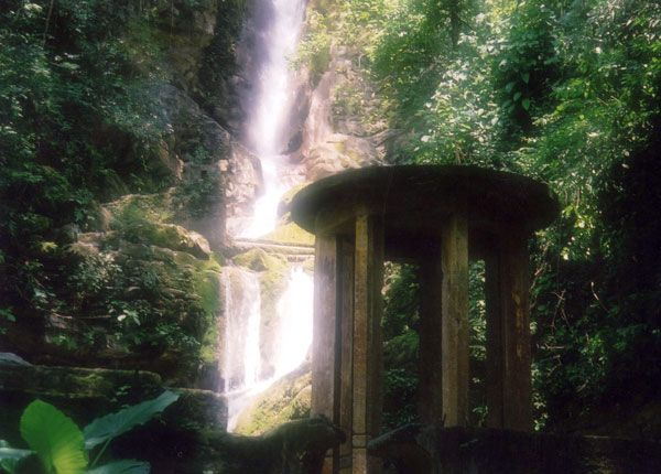 Xilitla Garden. Photo credit: Don Walheim