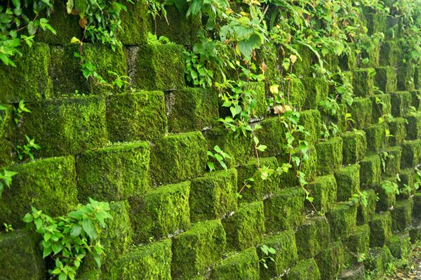 Retaining wall covered in moss. Credit: CC BY-SA 3.0 , by Fred Hsu