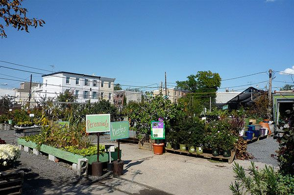 Experimental urban farm in Kensington, Philadelphia: intended to be a prototype of urban agriculture that can be replicated by others. A combination of straight urban farming and community-supported agriculture (CSA). Photo credit: David Barrie. Source.