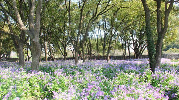 Chenshan Botanical Garden