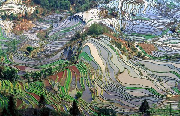 Abstract pattern of terraced rice fields in Yuanyang County. Photo credit: Jialiang Gao, www.peace-on-earth.org - Original Photograph. Licensed under CC 3.0