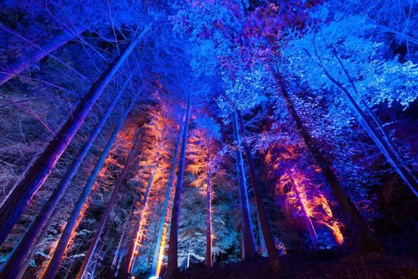 Courtesy of The Enchanted Forest Community Trust Author: Graham Smith