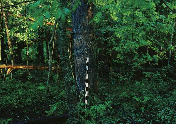 Forest of Sponsors, 2004 (triptych). Image credit: © Ilkka Halso