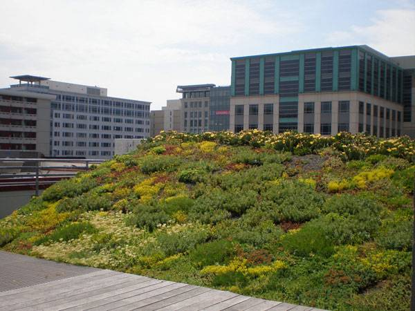 ASLA Green Roof. Image courtesy of Conservation Desgin Forum