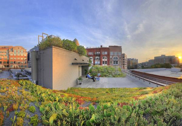 ASLA Green Roof. Image courtesy of Conservation Design Forum