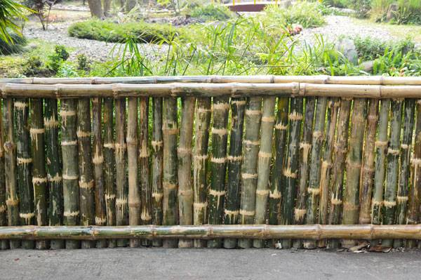 """Bamboo Fence - Agri-Horticultural Society of India - Alipore - Kolkata 2013-01-05 2371"" by Biswarup Ganguly. Licensed under CC BY 3.0 via Wikimedia Commons - https://commons.wikimedia.org/wiki/File:Bamboo_Fence_-_Agri-Horticultural_Society_of_India_-_Alipore_-_Kolkata_2013-01-05_2371.JPG#/media/File:Bamboo_Fence_-_Agri-Horticultural_Society_of_India_-_Alipore_-_Kolkata_2013-01-05_2371.JPG"