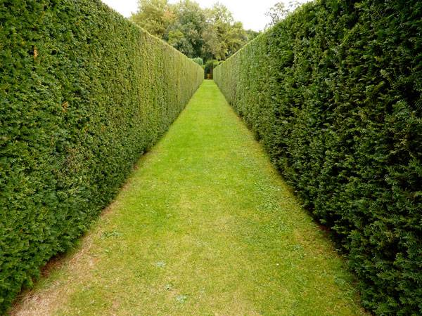 """Hedge alley"" by allispossible.org.uk. Licensed under CC BY 2.0 via Flickr"