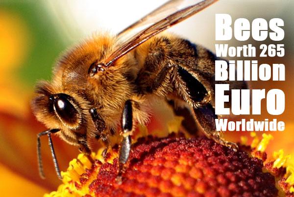 """Bee-apis"" by Maciej A. Czyzewski - Own work. Licensed under GFDL via Commons - https://commons.wikimedia.org/wiki/File:Bee-apis.jpg#/media/File:Bee-apis.jpg"