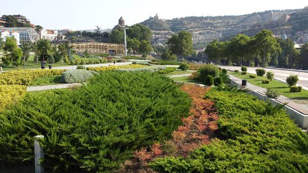 Greenery in Rike Park. Photo credit: Paula Uzarek