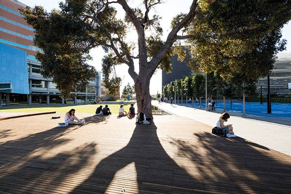 Monash University, Caulfield Campus Green, by Taylor Cullity Lethlean (T.C.L). Photo credit: John Gollings