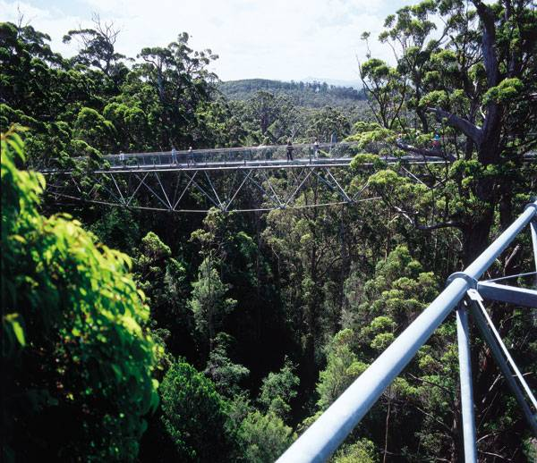Valley of the Giants Tree Top Walk. Photo courtesy of Donaldson and Warn