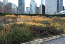 Place Value: Empowering Landscape Architects to Measure the Economic Benefits of Designed Landscapes